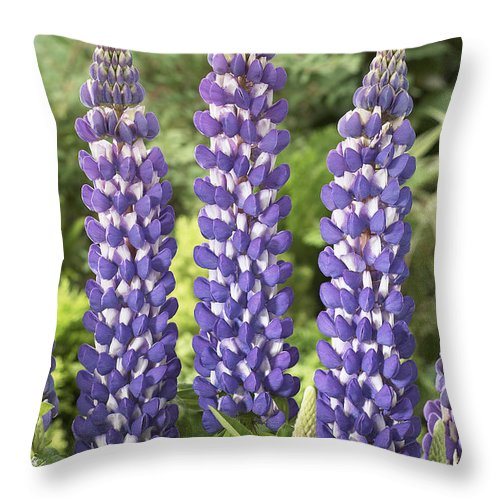 Vp Throw Pillow featuring the photograph Lupine Lupinus Sp Sea Horse Variety by VisionsPictures