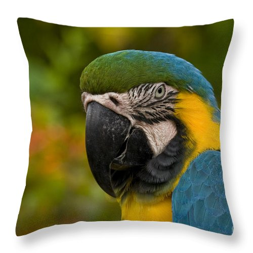 Macaw Throw Pillow featuring the photograph Macaw Parrot Stare Down by Darleen Stry