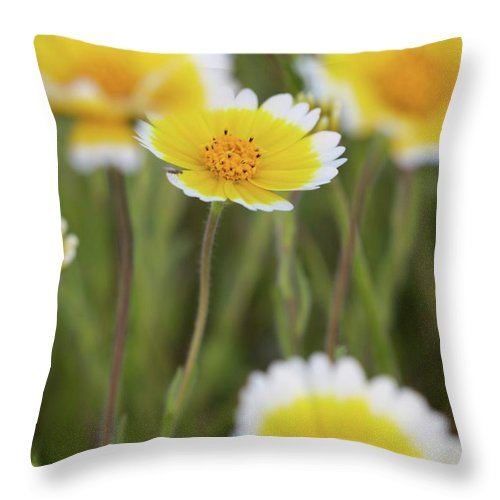 Wildflowers Photographs Throw Pillow featuring the photograph Macro Wildflower by Brooke Roby