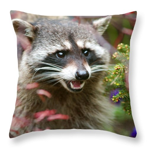 Raccoon Throw Pillow featuring the photograph Mad Raccoon by Randy Harris