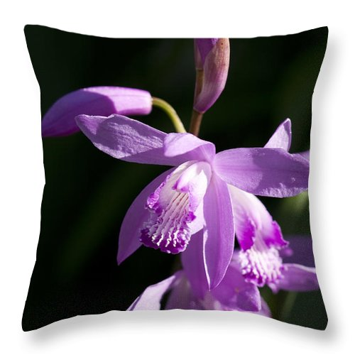 Bletilla Throw Pillow featuring the photograph Magenta Hardy Chinese Orchids - Bletilla by Kathy Clark