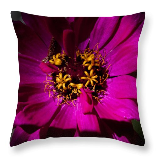 Flower Throw Pillow featuring the photograph Magenta Light by David Patterson