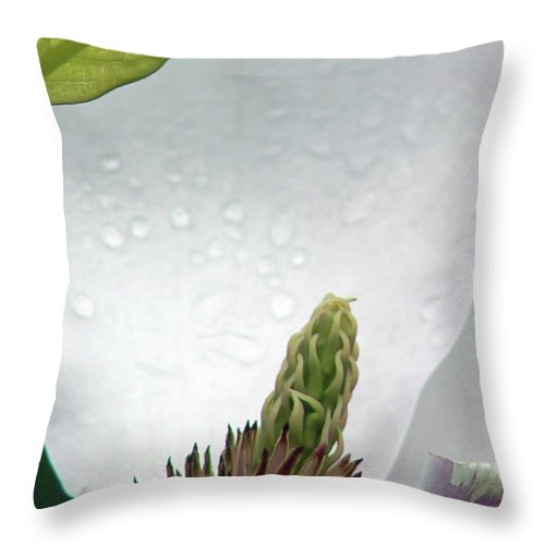 Magnolia Throw Pillow featuring the photograph Magnolia Exposed by Pamela Patch