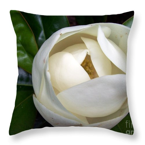 Magnolia Throw Pillow featuring the photograph Magnolia In Bloom by Gwen Baptiste
