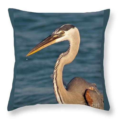 Bird Throw Pillow featuring the photograph Majestic Great Blue Heron by Stephen Whalen
