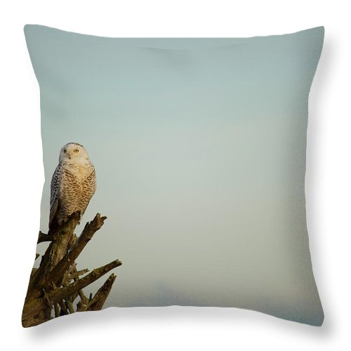 Owl Throw Pillow featuring the photograph Majestic by Karen Ulvestad