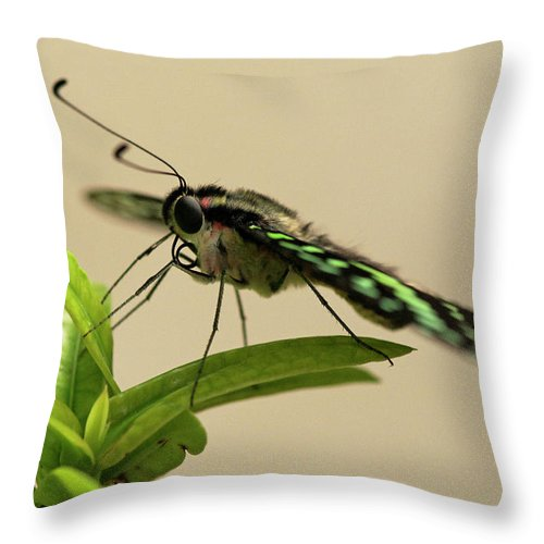 Abc Islands Throw Pillow featuring the photograph Malachite Butterfly by Roderick Bley
