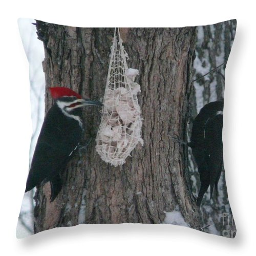 Piliated Throw Pillow featuring the photograph Male And Female Pileated Woodpeckers by Judi Deziel