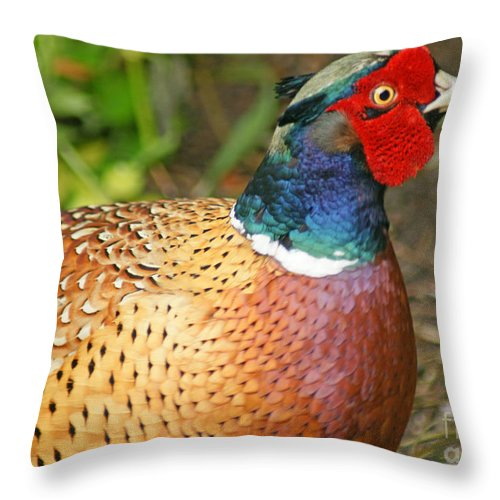 Pheasant Throw Pillow featuring the photograph Male Pheasant by David Birchall