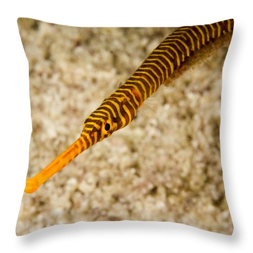 One Animal Throw Pillow featuring the photograph Male Yellow Banded Pipefish Carrying by Tim Laman