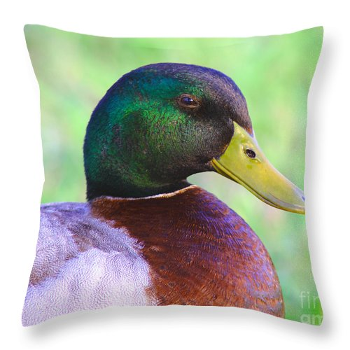 Avian Throw Pillow featuring the photograph Mallard Drake In Shade by Robert Frederick