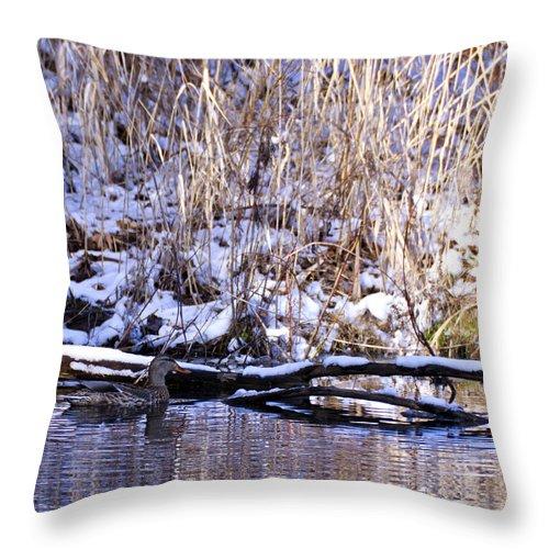Usa Throw Pillow featuring the photograph Mama Duck On Patrol by LeeAnn McLaneGoetz McLaneGoetzStudioLLCcom