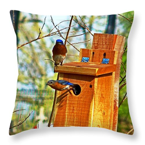 Bluebird Throw Pillow featuring the photograph Mama Leaving by William Fields