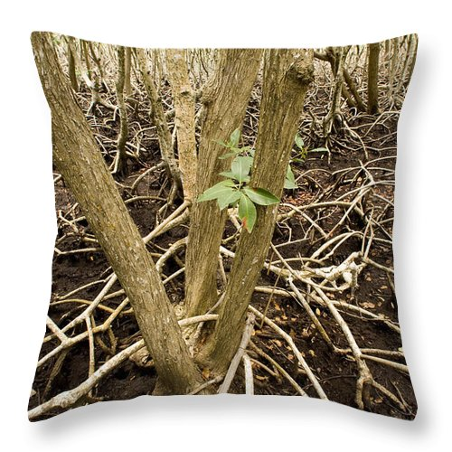 Nobody Throw Pillow featuring the photograph Mangrove Forest With Red Mangrove by Tim Laman