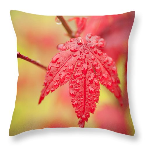 Autumn Throw Pillow featuring the photograph Maple 1 by Joye Ardyn Durham