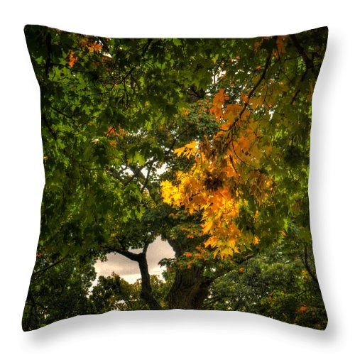 Xdop Throw Pillow featuring the photograph Maple In Oak Grove by John Herzog