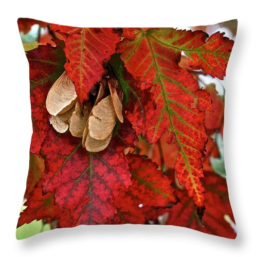 Outdoors Throw Pillow featuring the photograph Maple Leaves And Seeds by Susan Herber