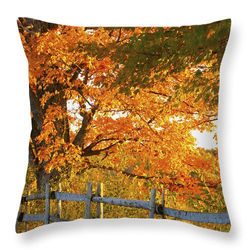 Autumn Colors Throw Pillow featuring the photograph Maple Trees And A Rail Fence In Autumn by David Chapman