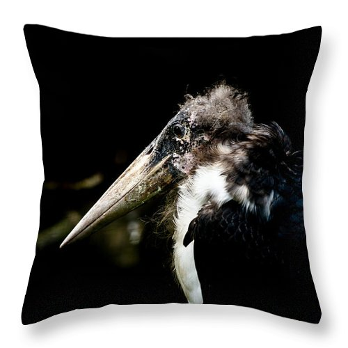 Art Throw Pillow featuring the photograph Marabou Stork by Hakon Soreide