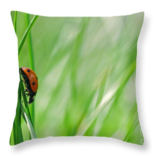 Ladybirds Throw Pillow featuring the photograph Ladybug In The Meadow by Tanja Riedel