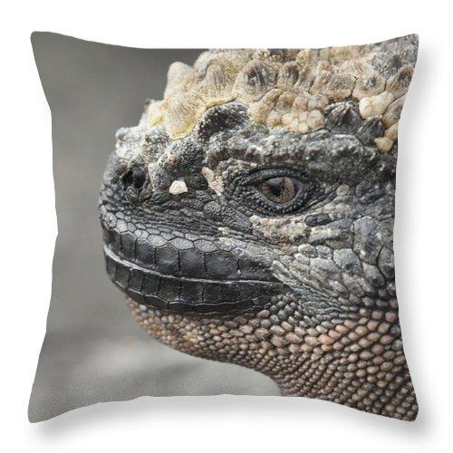 Animal Head Throw Pillow featuring the photograph Marine Iguana Amblyrhynchus Cristatus by Keith Levit