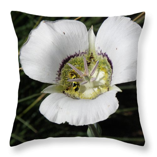Lilies Throw Pillow featuring the photograph Mariposa Lily And Beetle by Feva Fotos
