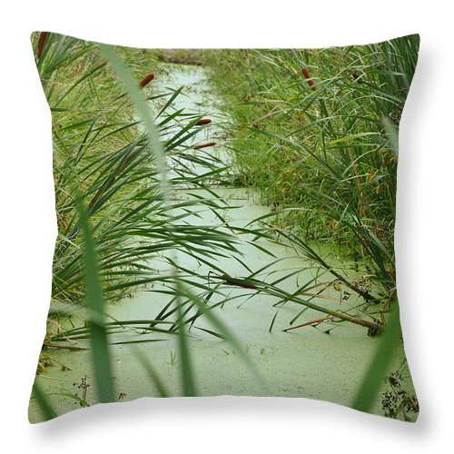 Marsh Throw Pillow featuring the photograph Marsh-field Ma by Christine Stonebridge