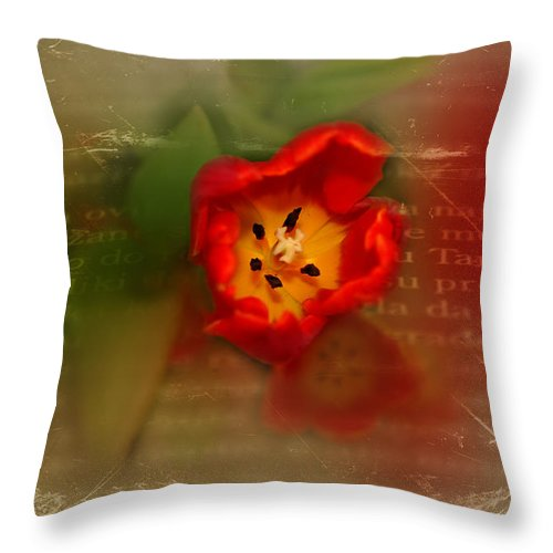 Tulips Throw Pillow featuring the photograph Mature by Mary Timman