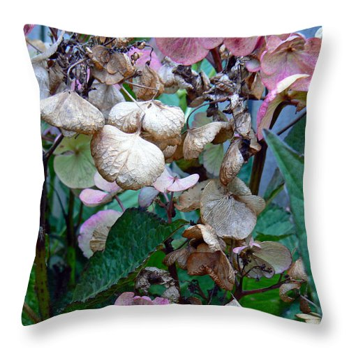 Hydrangea Throw Pillow featuring the photograph Mauve Hydrangea In Fall by Pamela Patch