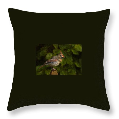 Cardinal Throw Pillow featuring the photograph Meal Time by Steven Richardson