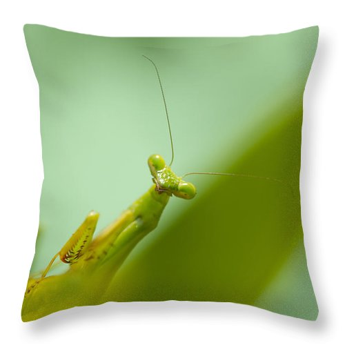 Praying Mantis Throw Pillow featuring the photograph Mean Green Fighting Machine by Kathy Clark