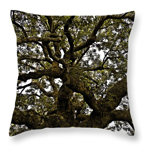 Tree Throw Pillow featuring the photograph Meditation Tree by Kristen Cavanaugh