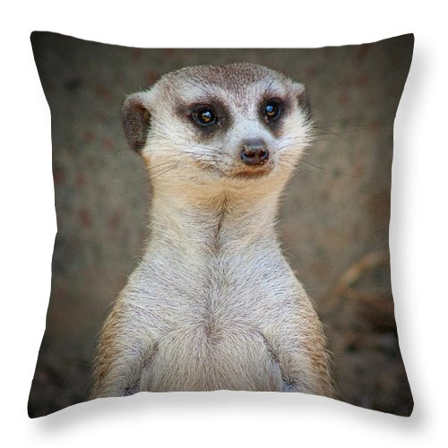 Meerkat Throw Pillow featuring the photograph Meerkat Manor by Douglas Barnard