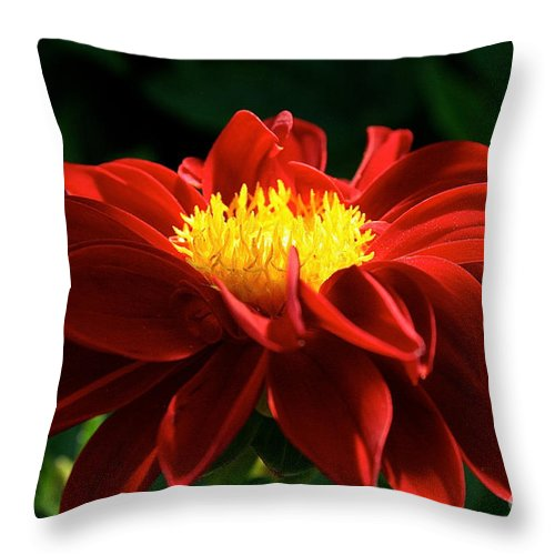 Outdoors Throw Pillow featuring the photograph Melody Mambo Dahlia by Susan Herber