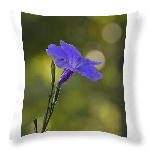 Mexican Petunia Throw Pillow featuring the photograph Mexican Petunia by Steven Richardson