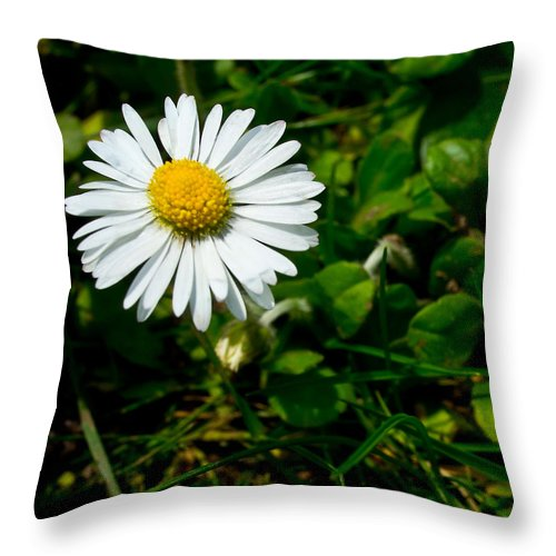 Miniature Throw Pillow featuring the photograph Miniature Daisy In The Grass by Mick Anderson