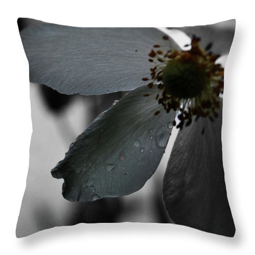 Dew On Water Throw Pillow featuring the photograph Miss You by The Artist Project