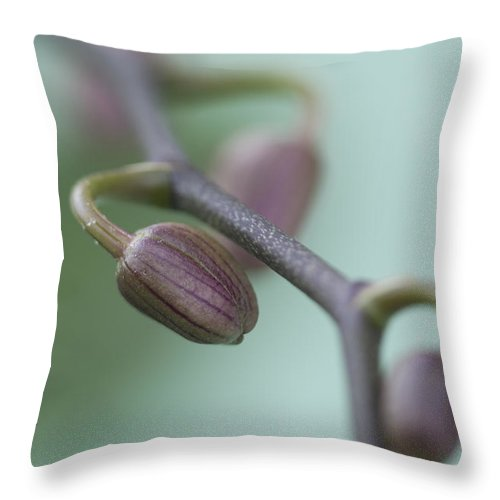 Orchid Throw Pillow featuring the photograph Misty Orchid Buds by Kathy Clark