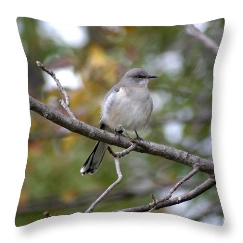 Birds Throw Pillow featuring the photograph Mockingbird by Living Color Photography Lorraine Lynch