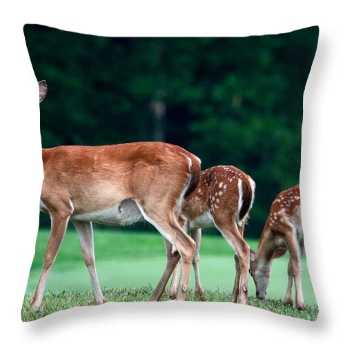 3 Deer Throw Pillow featuring the photograph Mom With Twins by Sally Weigand