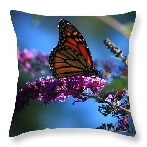 Butterfly Throw Pillow featuring the photograph Monarch Butterfly by Patrick Witz