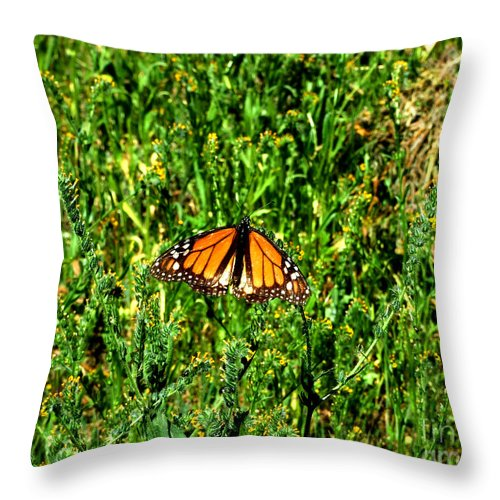 Artoffoxvox Throw Pillow featuring the photograph Monarch Butterfly Photograph by Kristen Fox