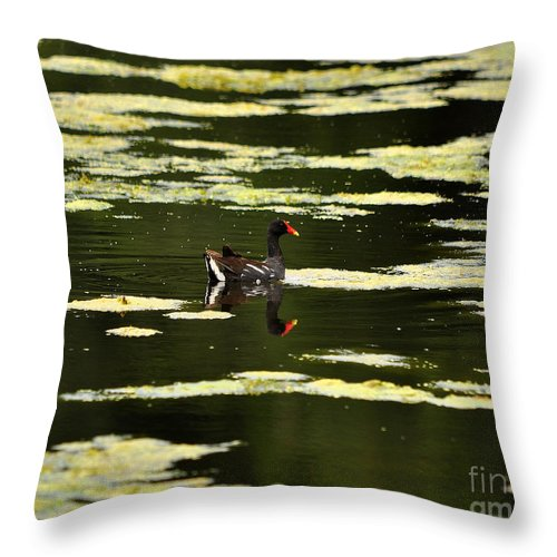 Moorhen Throw Pillow featuring the photograph Moorhen Reflection by Al Powell Photography USA
