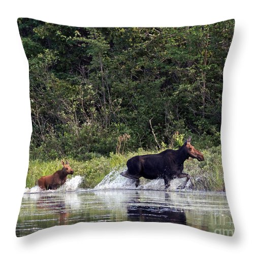 Moose Throw Pillow featuring the photograph Moose N Baby..out Of Here by Lloyd Alexander