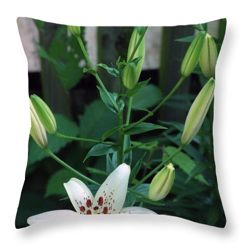 Lilies Throw Pillow featuring the photograph More On The Way by Wanda Brandon