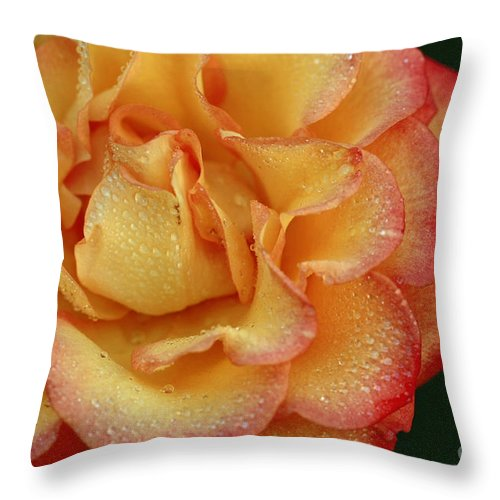 Flower Throw Pillow featuring the photograph Morning Dew by Inspired Nature Photography Fine Art Photography