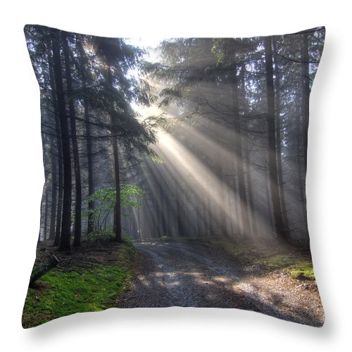Rays Throw Pillow featuring the photograph Morning Forest In Fog by Michal Boubin