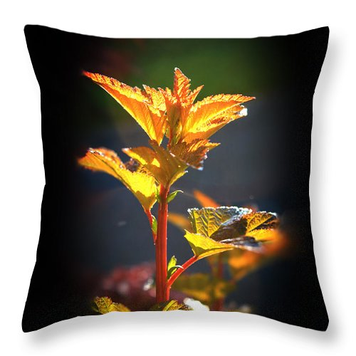 Morning Light Throw Pillow featuring the photograph Morning Light by Heinz G Mielke