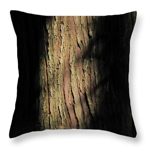 Nature Throw Pillow featuring the photograph Morning Light On Cedar by Sean Griffin