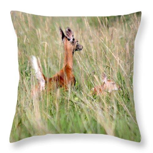 Deer Throw Pillow featuring the photograph Morning Run by Lori Tordsen
